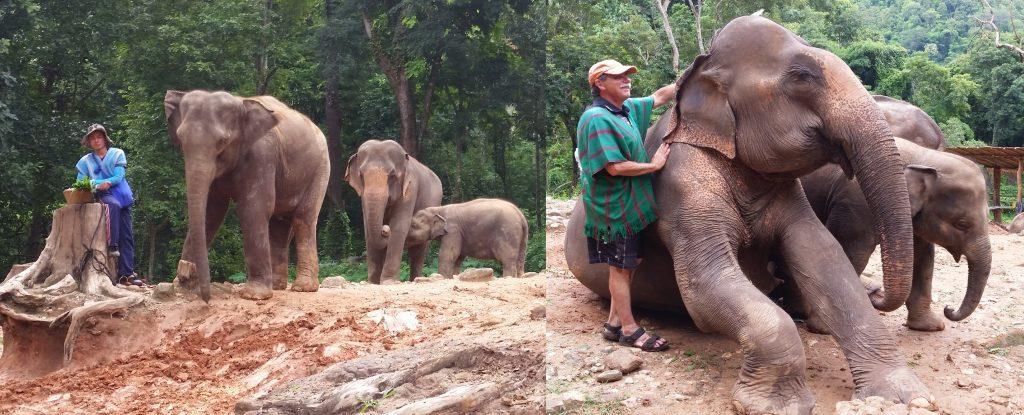 Patera's Elephant Farm